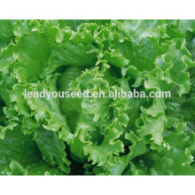 MLT06 Yidali green high quality lettuce seeds for sales